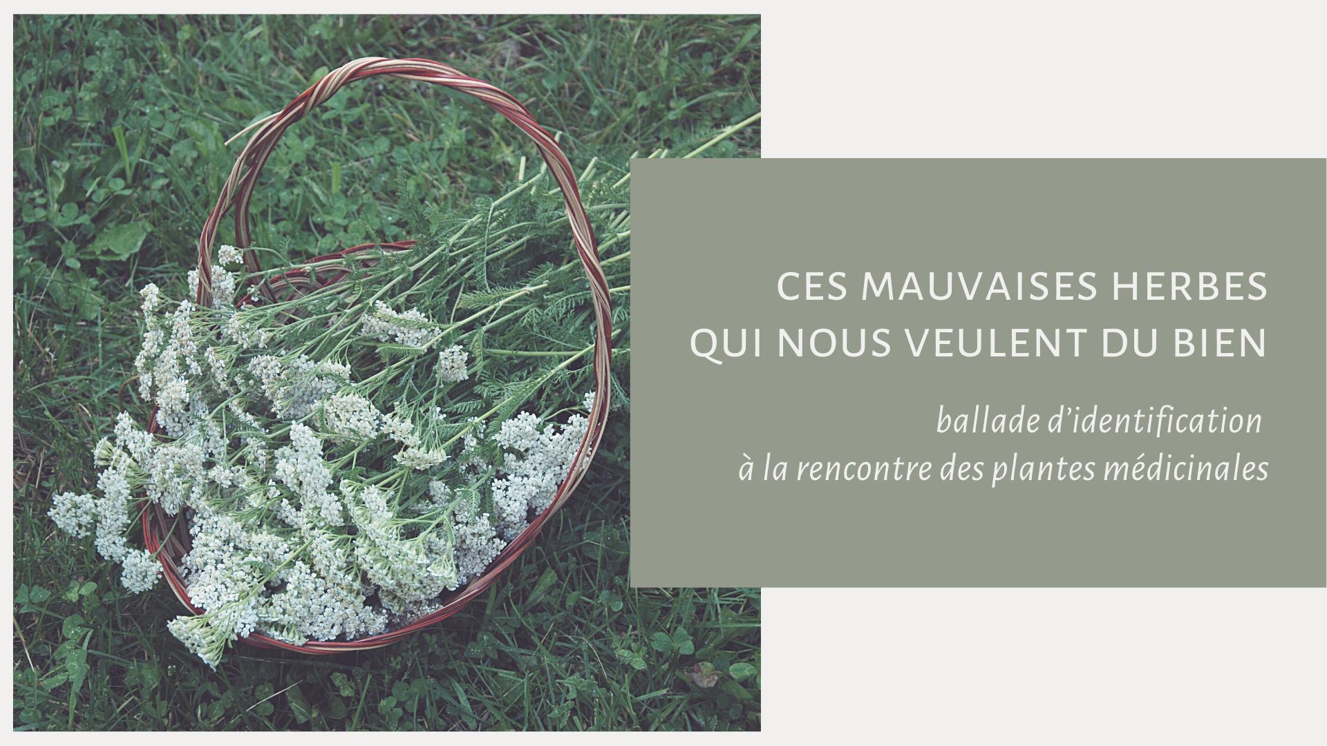Ces Mauvaises Herbes Qui Nous Veulent Du Bien : Ballade D'identification à La Rencontre Des Plantes Médicinales